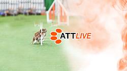 ATTLIVE_Logo